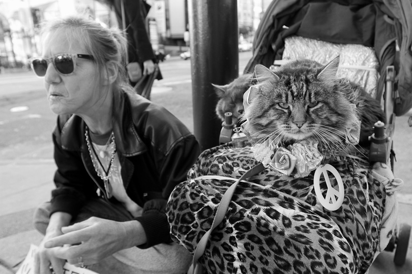 Patricia and her two cats are on the streets of San Francisco since she lost her office job due to her deteriorating sight.